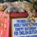 Only Good News, I Can Sleep Well - Cat Sleeping at Newspaper Box - Living Koroni