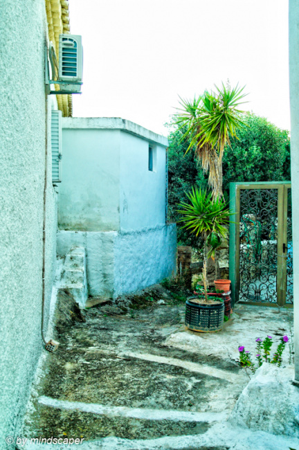 Small Alley with Palms - Vasilitsi