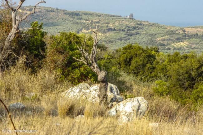 Outback at Mistraki